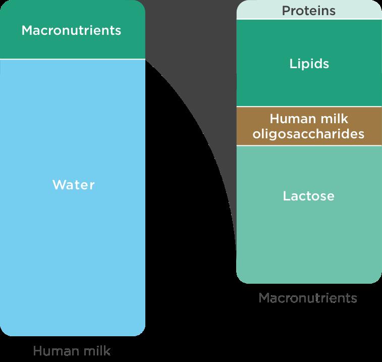 diagram-macronutrients